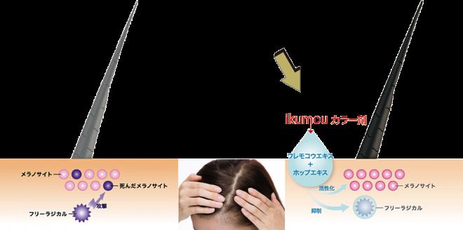 育毛カラーの作用イメージ